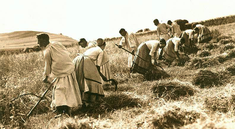 Letné práce našich predkov - žatva